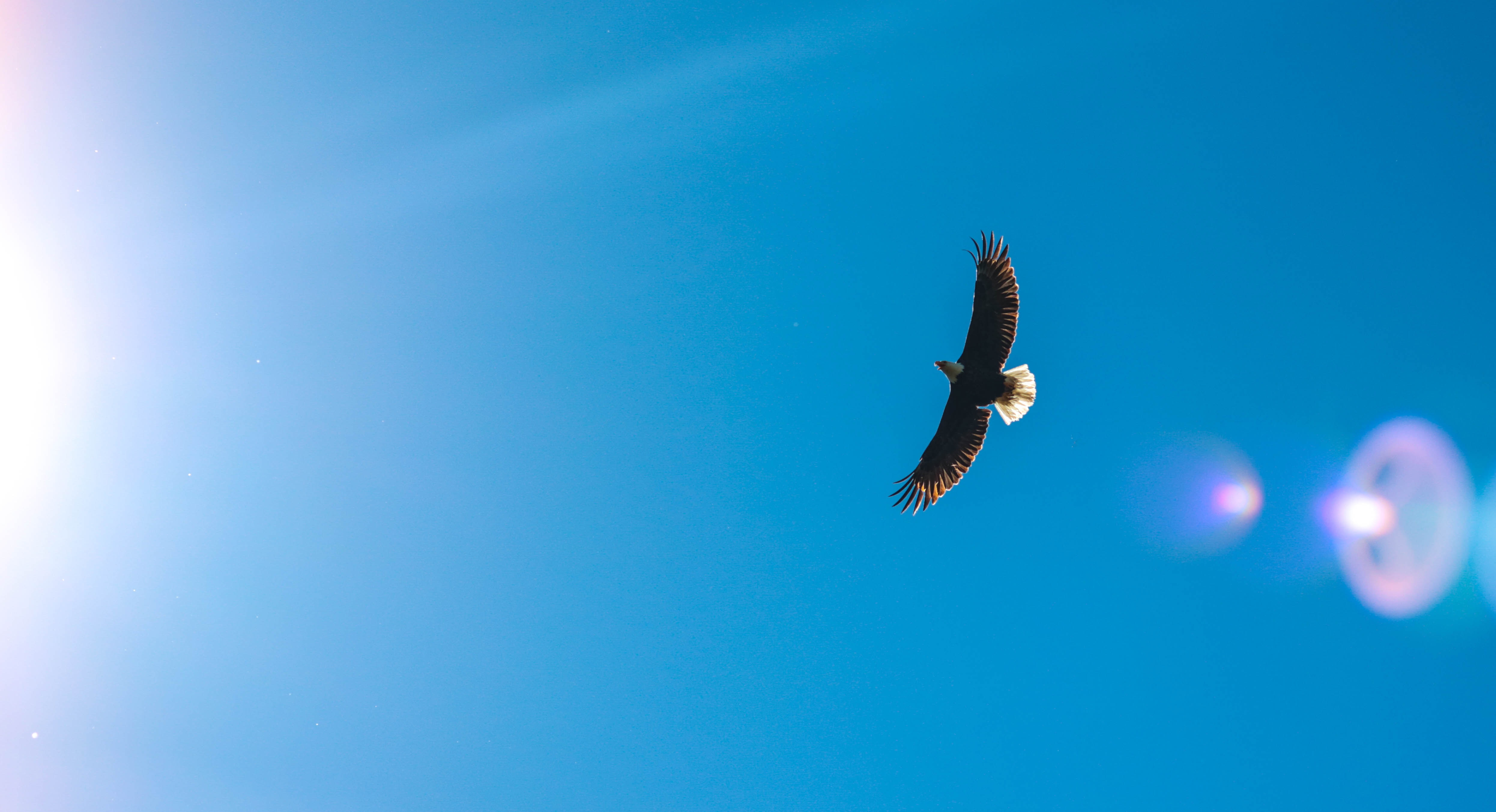 Graceful early flying in a blue sky